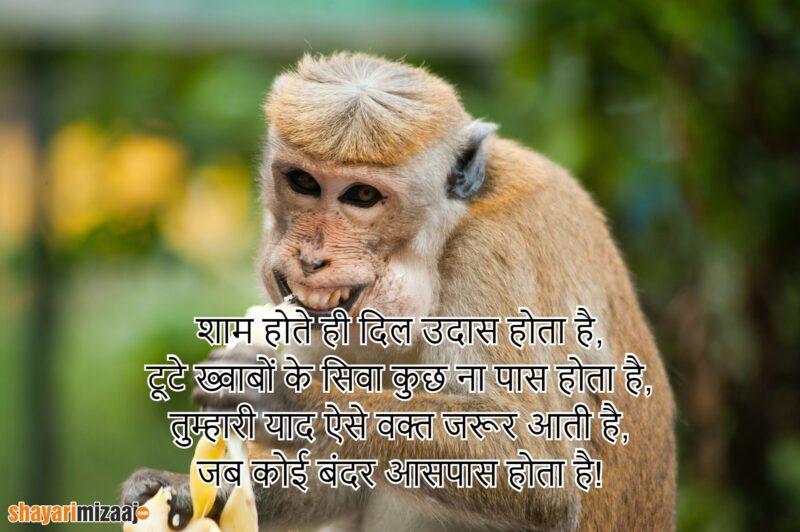 Insult Shayari